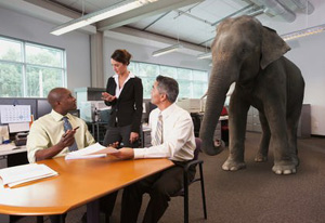 Elephant in the Room stock photo - John Lund