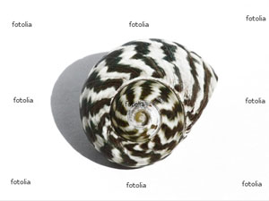 Fotolia watermark example